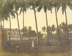 Scenery near Calcutta